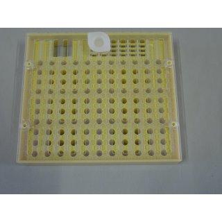 Nicot Zuchtkassette - Cupularve