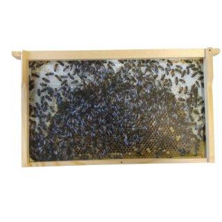 Virtuelles Bienenvolk DN - 11 Schauwaben