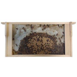 Virtuelles Bienenvolk Zander - 10 Schauwaben